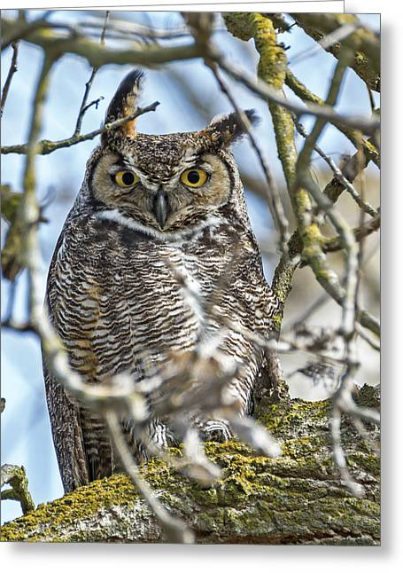 Great Horned Owl Greeting Card by Loree Johnson