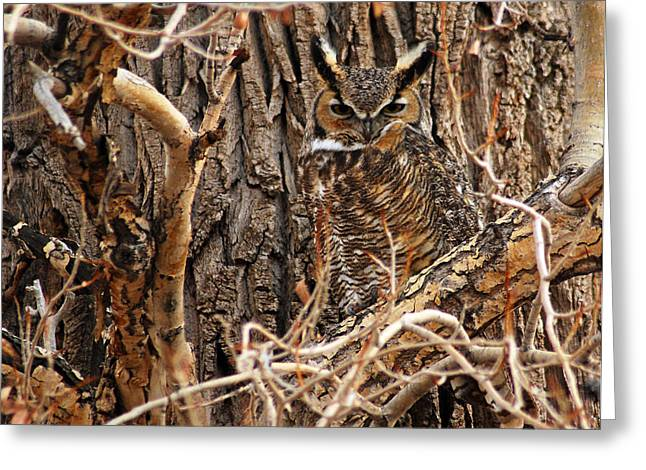 Great Horned Owl Greeting Card by Mike Ross