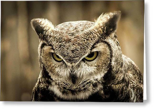 Great Horned Owl Greeting Card by Nicole Badger