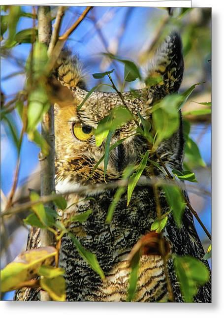 Great Horned Owl Peeking At It's Prey Greeting Card