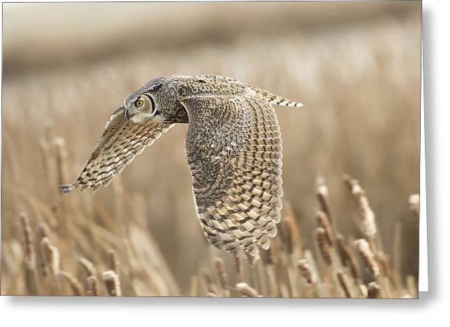 Great Horned Owl Greeting Card by Peter Stahl