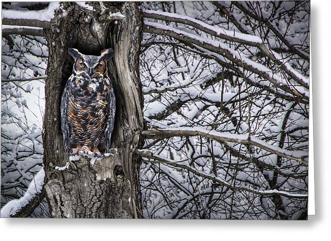 Great Horned Owl Sitting In A Tree During A Snowstorm Greeting Card