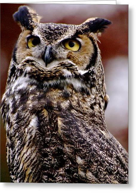 Great Horned Owl Greeting Card by Sonja Anderson