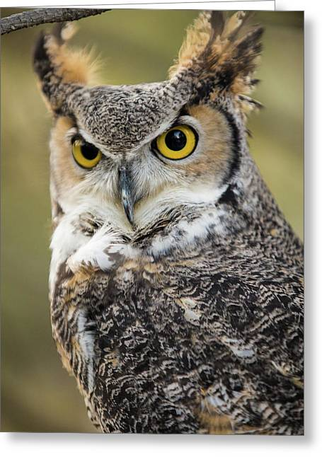 Greeting Card featuring the photograph Great Horned Owl by Wesley Aston