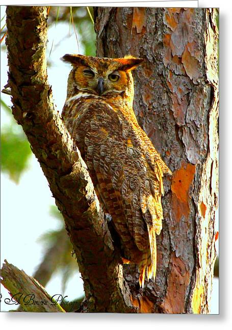 Great Horned Owl Wink Greeting Card by Barbara Bowen