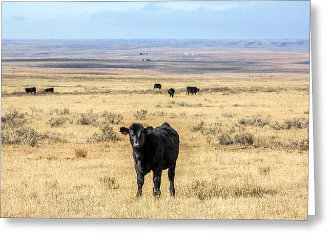 Great Plains Steer Greeting Card by Todd Klassy