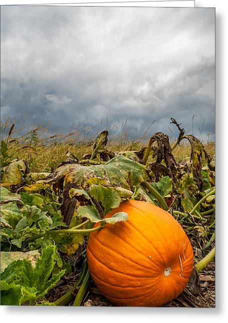 Great Pumpkin Off Center Greeting Card
