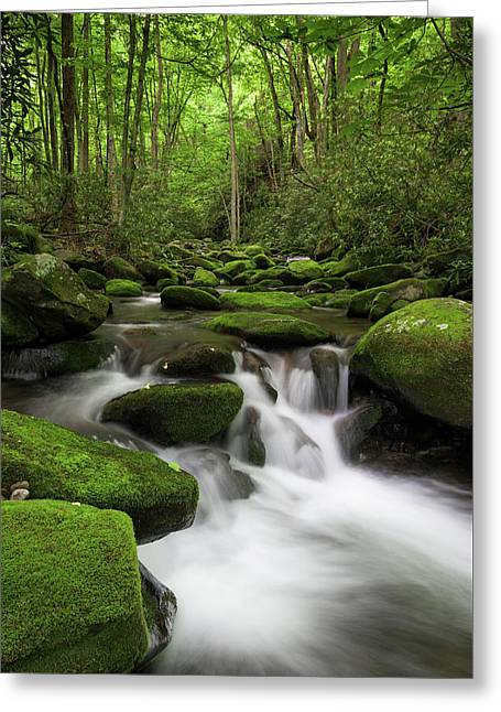 Great Smoky Mountains Roaring Fork Greeting Card by Mark VanDyke