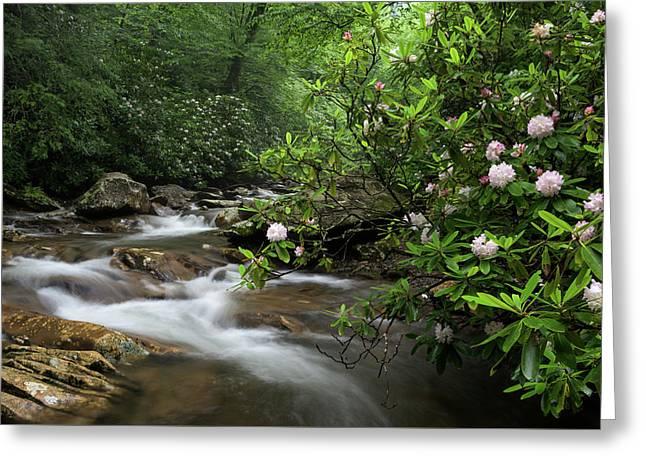 Great Smoky Mountains Rosebay Rhododendron Greeting Card by Mark VanDyke
