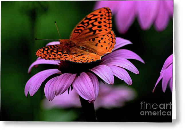 Great Spangled Fritillary Greeting Card by Brenda Bostic