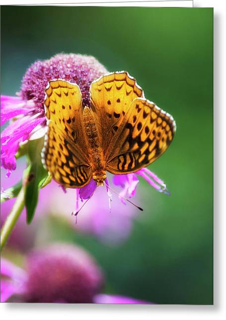 Great Spangled Fritillary Butterfly Greeting Card by Christina Rollo