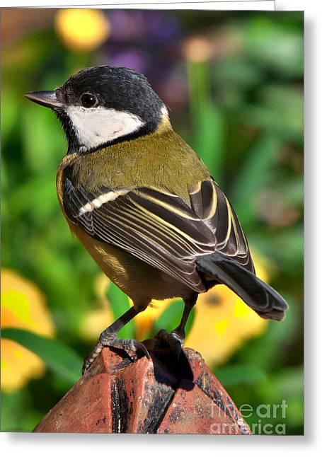 Great Tit British Bird Parus Major Greeting Card