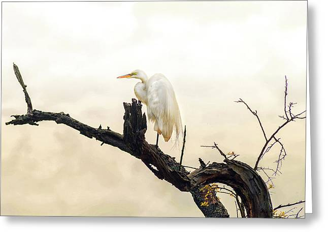 Great White Egret #1 Greeting Card by Donnie Smith