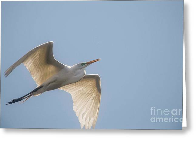 Greeting Card featuring the photograph Great White Egret - 2 by David Bearden