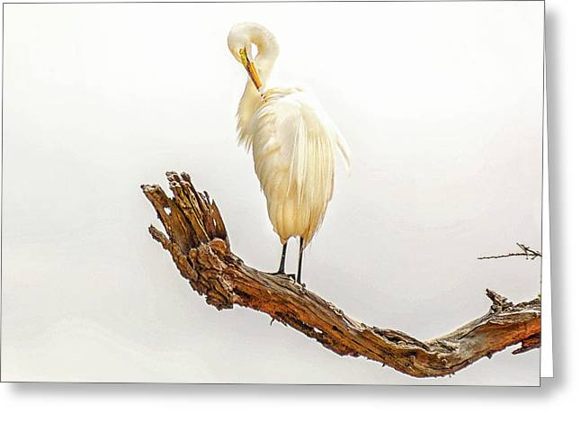 Great White Egret #3 Greeting Card by Donnie Smith