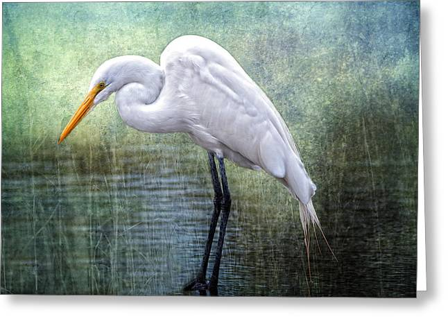 Egret Greeting Cards - Great White Egret Greeting Card by Bonnie Barry