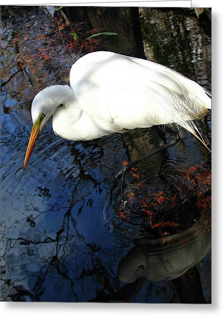 South West Florida Greeting Cards - Great White Egret Greeting Card by Juergen Roth