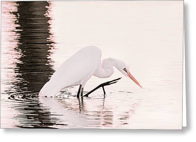 Greeting Card featuring the photograph Great White Egret Pink Sunset by Jennie Marie Schell