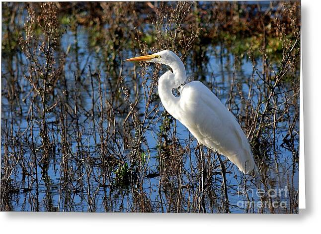 Great White Egret Greeting Card by Wingsdomain Art and Photography