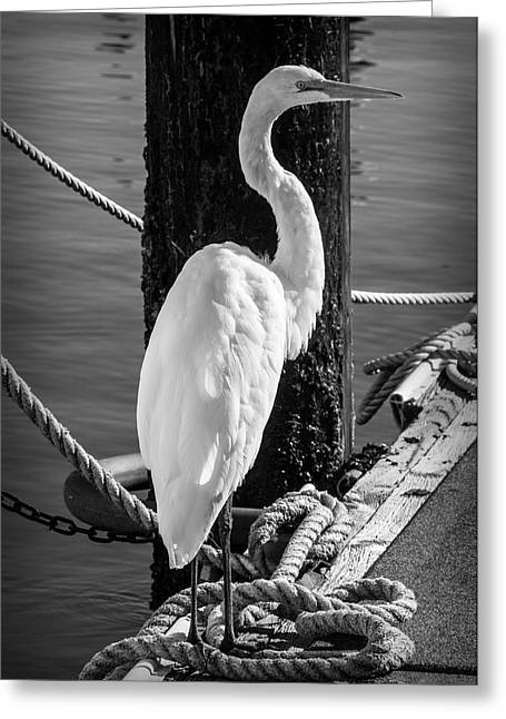 Great White Heron In Black And White Greeting Card by Garry Gay