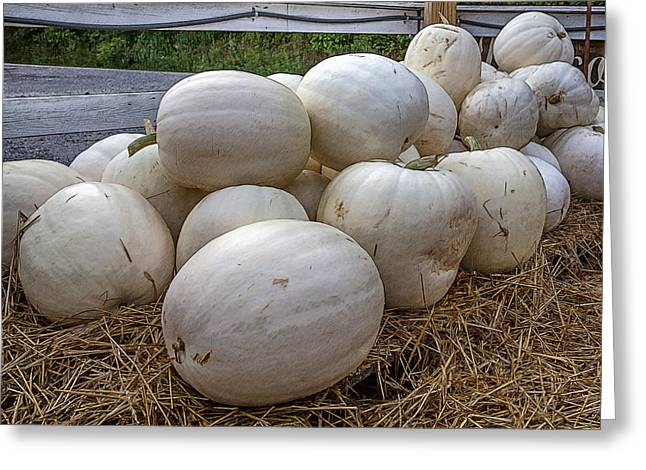 Great White Pumpkins Greeting Card