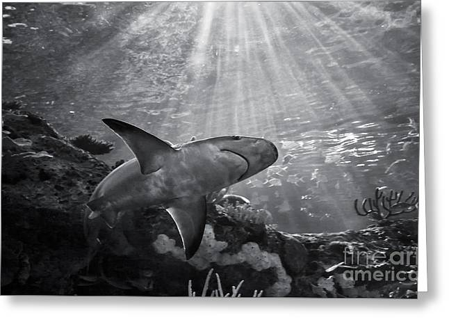 Great White Shark Greeting Card by Charline Xia