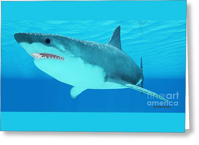 Great White Shark Close-up Greeting Card