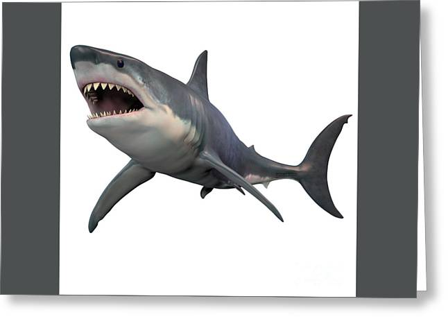 Great White Shark Isolated Greeting Card