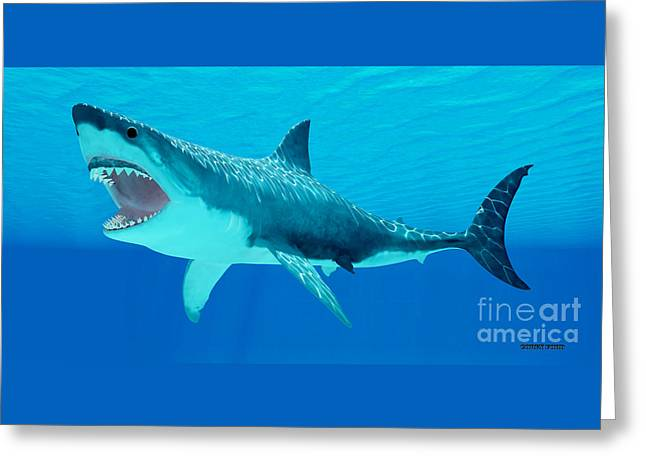 Great White Shark Underwater Greeting Card by Corey Ford