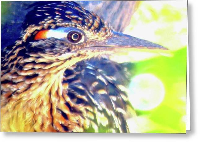 Greater Roadrunner Portrait 2 Greeting Card