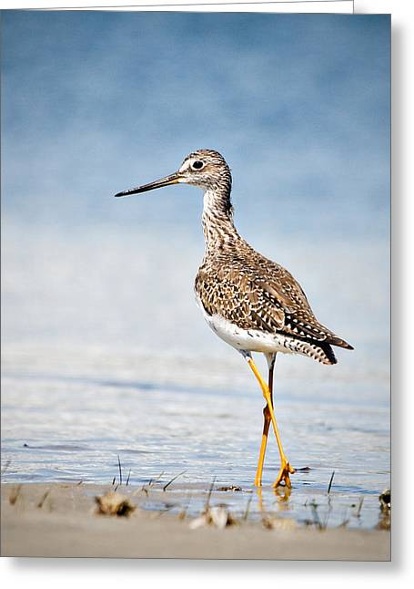 Greeting Card featuring the photograph Greater Yellow Legs At Rachel Carson Estuarine Reserve by Bob Decker