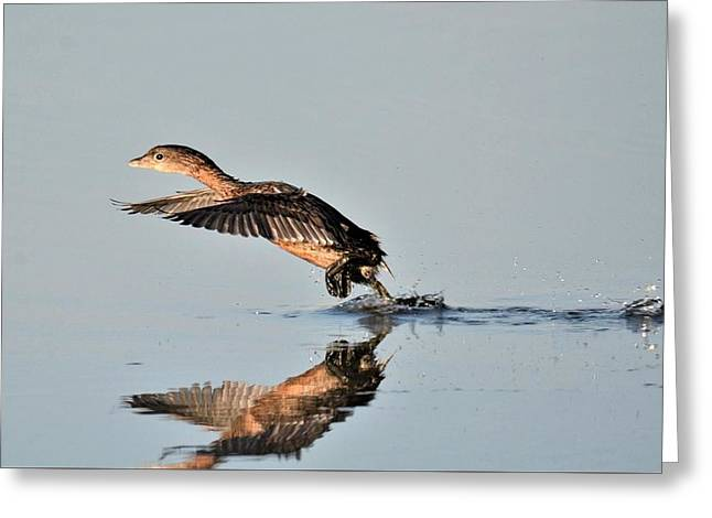 Grebe Greeting Card