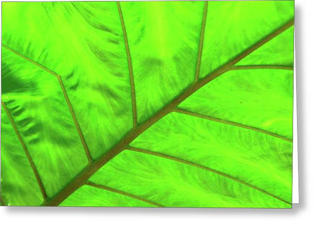 Green Abstract No. 5 Greeting Card