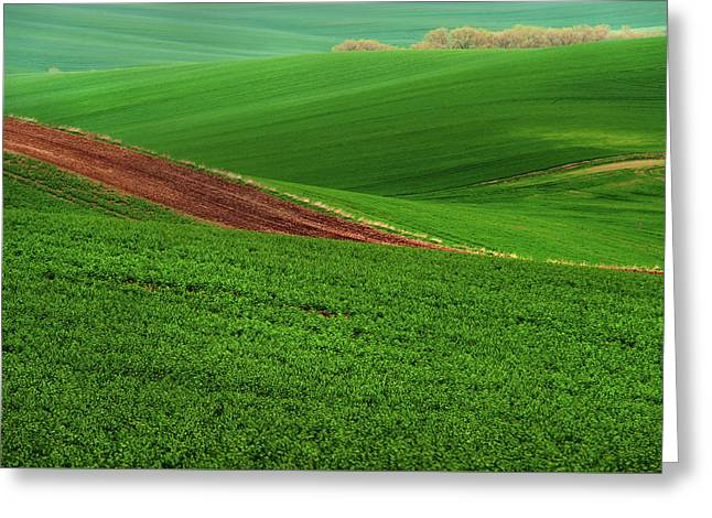 Green Abstract Of Farmland Greeting Card by Jenny Rainbow
