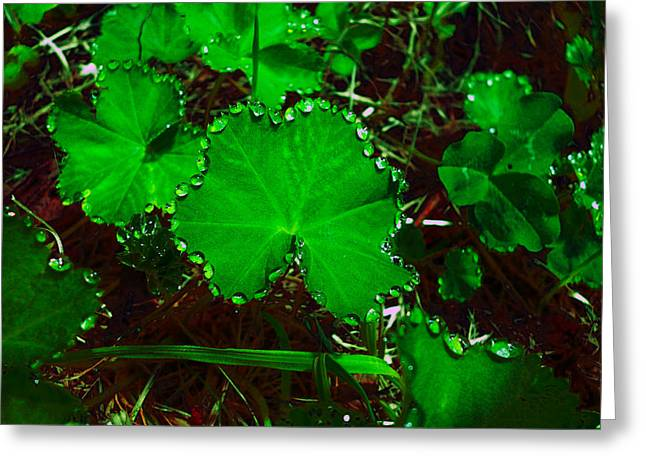 Green And Drops Greeting Card