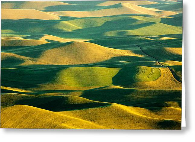 Green And Gold Acres Greeting Card by Todd Klassy
