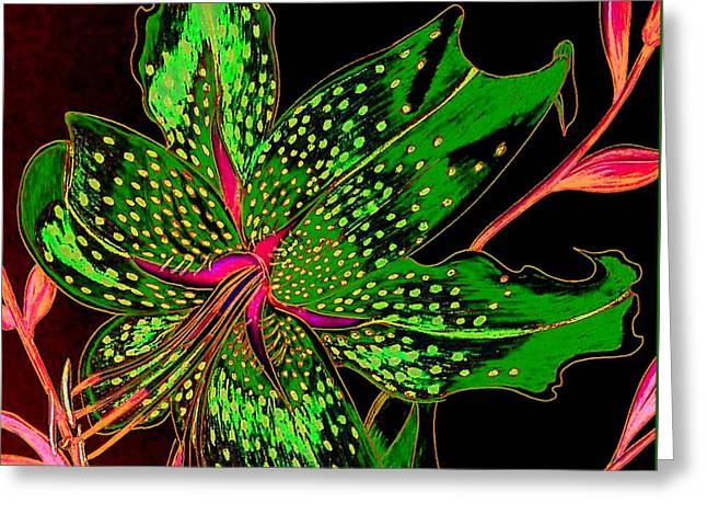 Green And Pink Stargazer Greeting Card by Laura Wilson