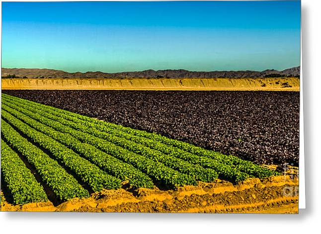 Green And Red Salad Bowl Greeting Card by Robert Bales
