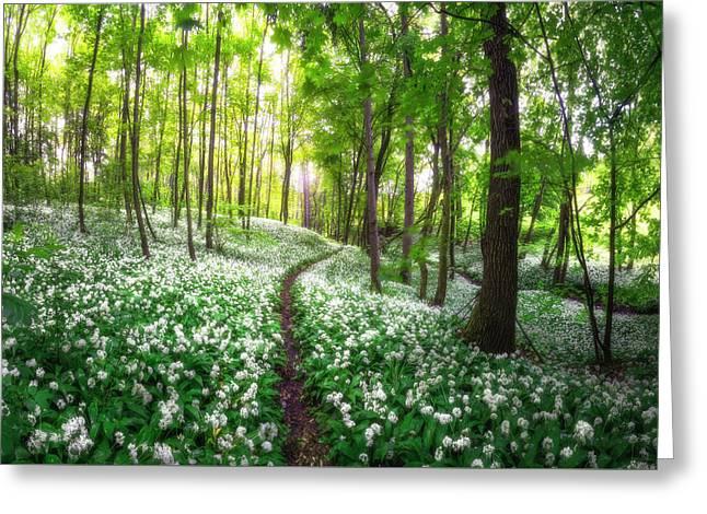 Green And White Kingdom Of Moisture Greeting Card by Janek Sedlar
