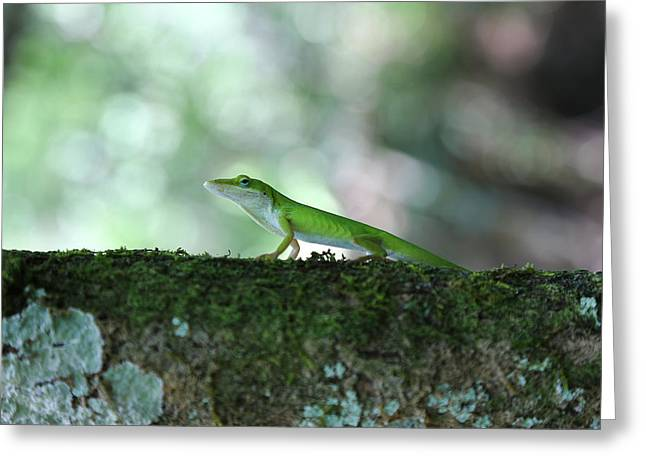 Green Anole Posing Greeting Card