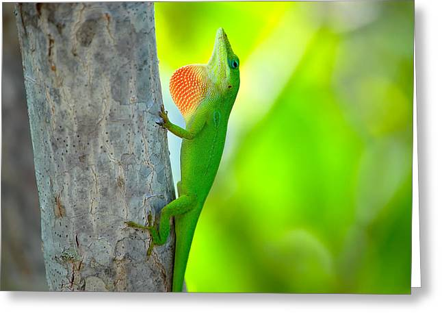 Green Anole Greeting Card by Rich Leighton