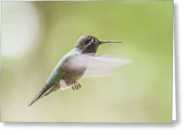 Hummingbird In Flight 2 Greeting Card