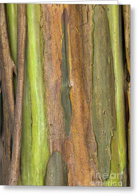 Greeting Card featuring the photograph Green Bark 3 by Werner Padarin