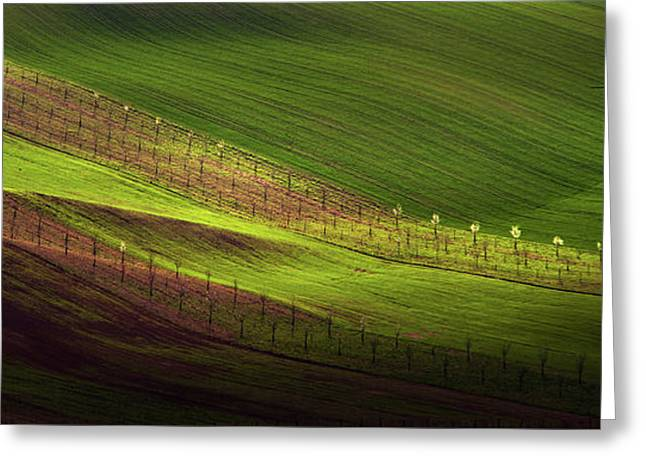Green Belts Of Fields Greeting Card by Jenny Rainbow