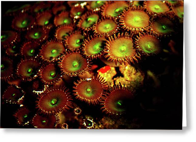 Greeting Card featuring the photograph Green Button Polyps by Anthony Jones