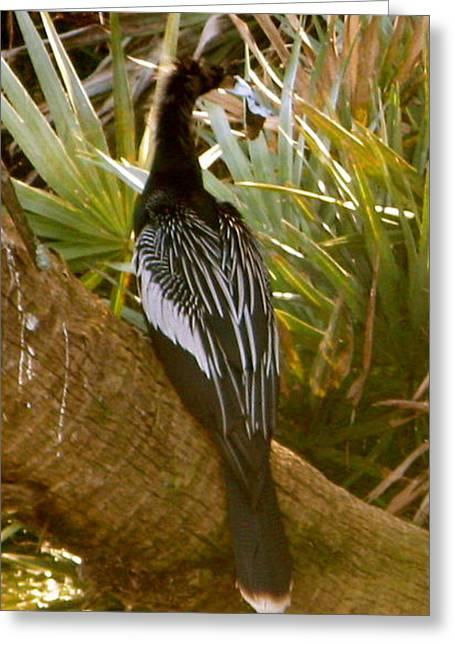 Green Cay Bird Greeting Card by Fanny Diaz