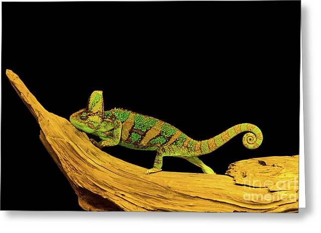 Green Chameleon Greeting Card