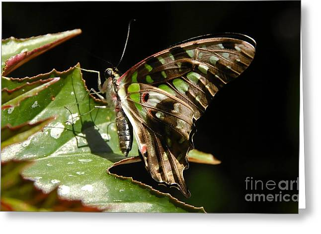 Green Checkered Skipper Greeting Card by David Lee Thompson