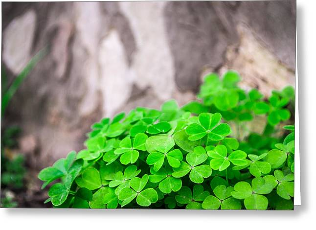 Green Clover And Grey Tree Greeting Card by John Williams