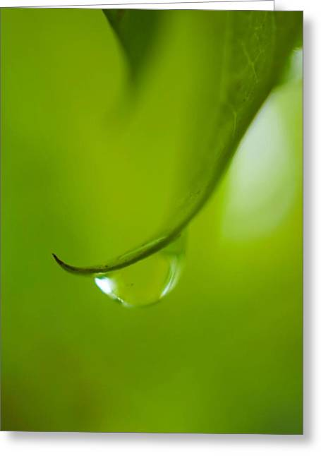 Green Drop Greeting Card